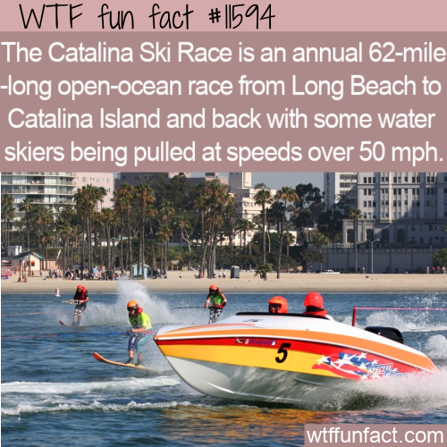 WTF Fun Fact - Insane Catalina Ski Race