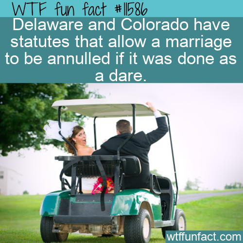 WTF Fun Fact - Marriage Dare
