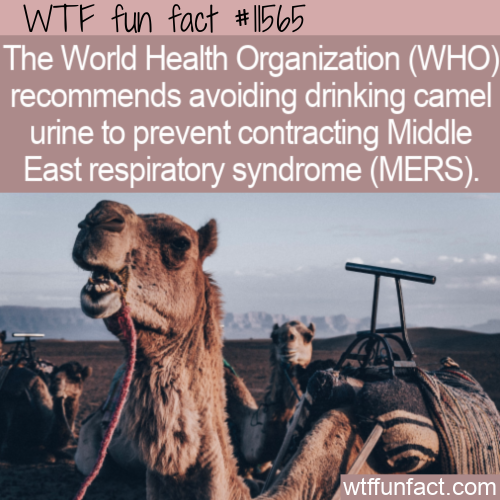 WTF Fun Fact - Weird WHO Recommendation