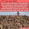 WTF Fun Fact – When Climate Change Gives You Floods