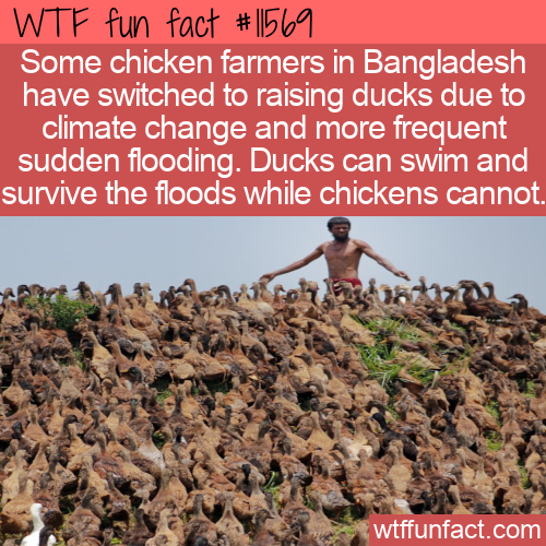 WTF Fun Fact - When Climate Change Gives You Floods