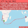 WTF Fun Fact – Yoshi Swim Home