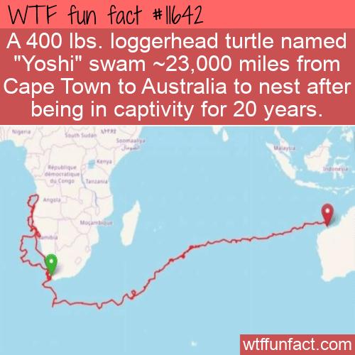 WTF Fun Fact - Yoshi Swim Home
