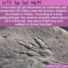 WTF Fun Fact – 4-year-old Finds Dinosaur Footprint