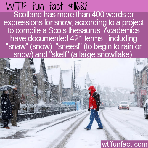 WTF Fun Fact - 421 Words For Snow