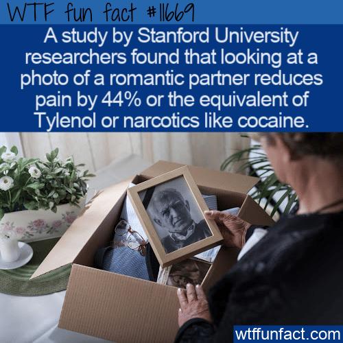 WTF Fun Fact - Alternative Pain Relief