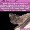 WTF Fun Fact – Bats At Altitude