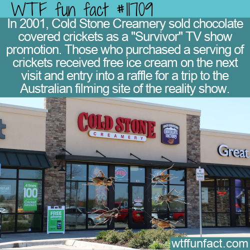 WTF Fun Fact - Cold Stone Creamery's Chocolate Covered Crickets