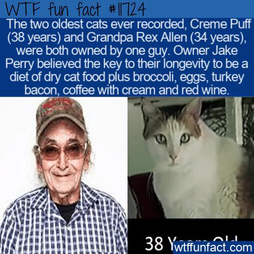 WTF Fun Fact - Creme Puffs Odd Diet