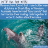 WTF Fun Fact – Dolphin Boy Bands