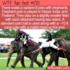 WTF Fun Fact – Elephant Polo