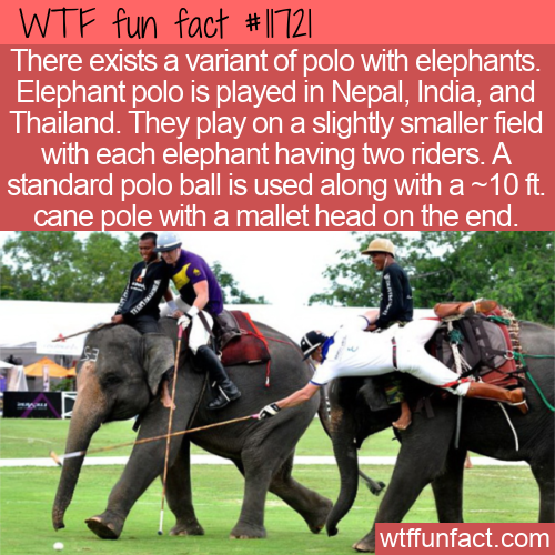 WTF Fun Fact - Elephant Polo