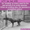 WTF Fun Fact – Endling