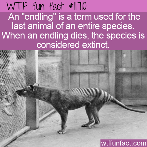WTF Fun Fact - Endling