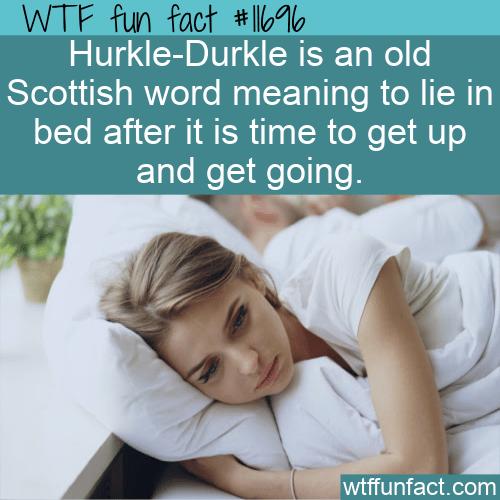 WTF Fun Fact - Hurkle-Durkle