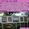 WTF Fun Fact – Mosquito Free Disney World