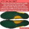 WTF Fun Fact – Nike Waffle Trainer