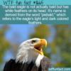 WTF Fun Fact – Pie-Bald Eagle