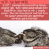 WTF Fun Fact – Poisonous Fur