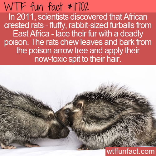 WTF Fun Fact - Poisonous Fur