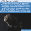 WTF Fun Fact – The 'Ultra-Black' Fish
