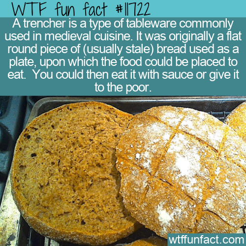 WTF Fun Fact - Trencher