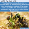 WTF Fun Fact – Autothysis