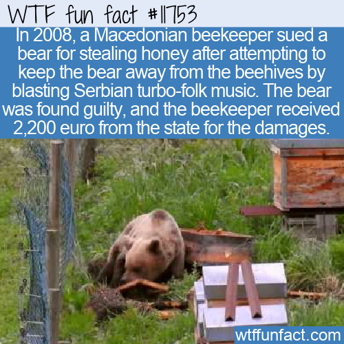 WTF Fun Fact - Bear Sued By Beekeeper
