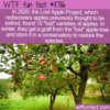 WTF Fun Fact – Lost Apple Project