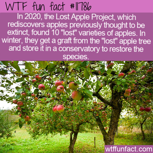 WTF Fun Fact - Lost Apple Project