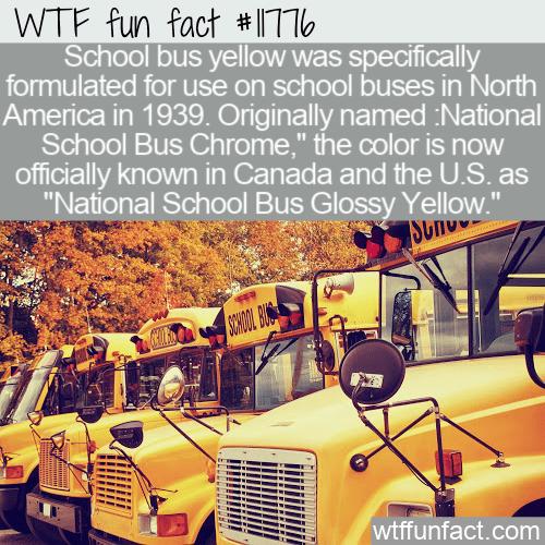 WTF Fun Fact - National School Bus Glossy Yellow