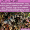 WTF Fun Fact – Shark Suction For Slurping And Swallowing