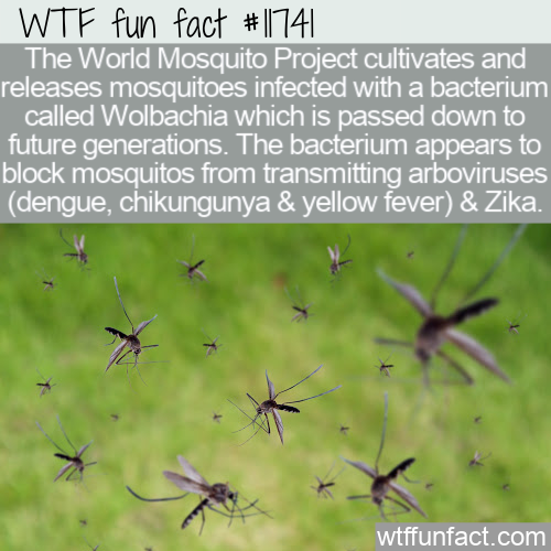 WTF Fun Fact - The World Mosquito Project