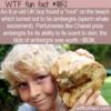 WTF Fun Fact – Ambergris On The Beach