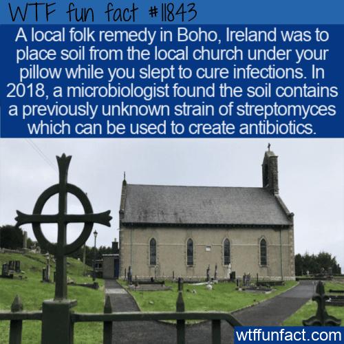 WTF Fun Fact - Boho Soil Folk Remedy