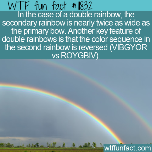WTF Fun Fact - Double Rainbow Details