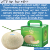 WTF Fun Fact – Expensive Crown Melons