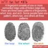 WTF Fun Fact – Friction Ridge Skin