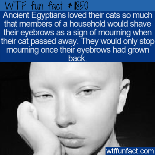 WTF Fun Fact - How Ancient Egyptians Mourned A Cat