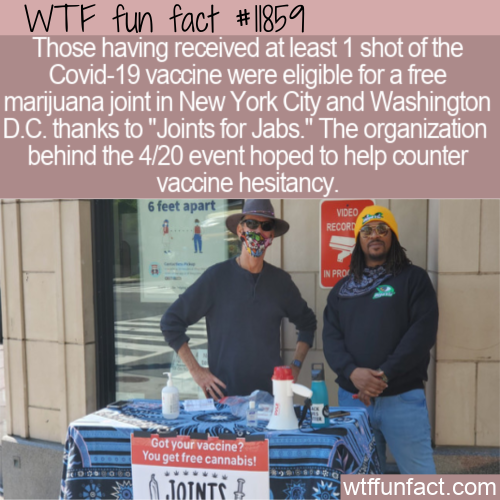WTF Fun Fact - Joints for Jabs
