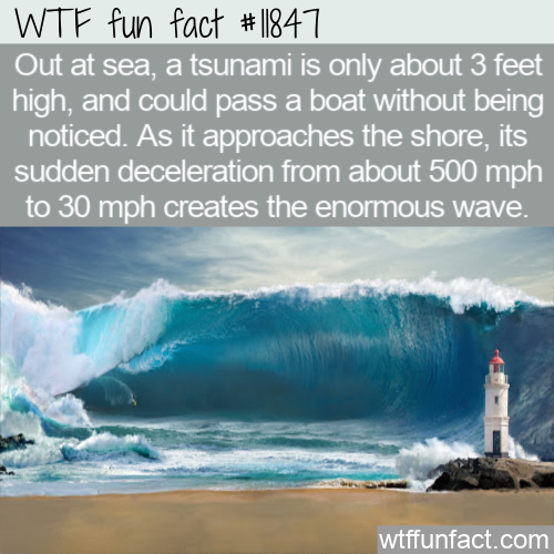 WTF Fun Fact - Tsunamis Are Hardly Noticeable At Sea