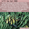 WTF Fun Fact – An Unlikely Place To Incubate Eggs