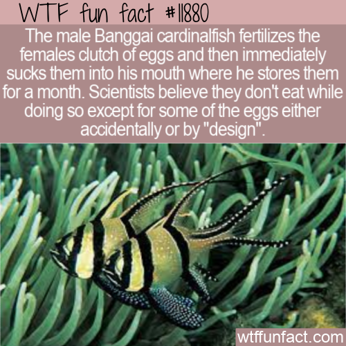 WTF Fun Fact - An Unlikely Place To Incubate Eggs