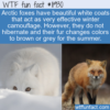WTF Fun Fact – Arctic Fox's Colorful Fur