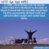 WTF Fun Fact – Göran Kropp