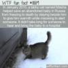 WTF Fun Fact – Masha The Hero Tabby Cat