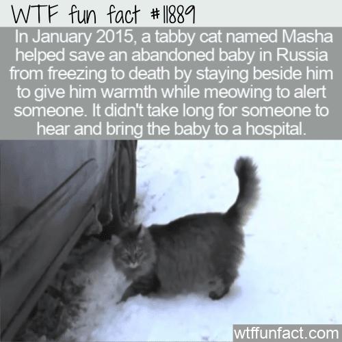 WTF Fun Fact - Masha The Hero Tabby C at