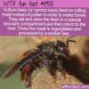 WTF Fun Fact – Meat Into Honey