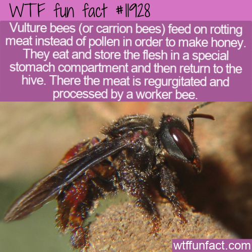 WTF Fun Fact - Meat Into Honey