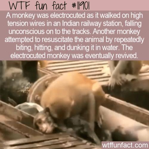WTF Fun Fact - Monkey See Monkey Do